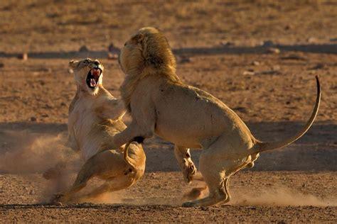 photopixsa african wildlife nature photography