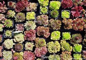 Blumen Für Steingarten : den steingarten bepflanzen steingartenpflanzen im berblick garten hausxxl garten hausxxl ~ Markanthonyermac.com Haus und Dekorationen