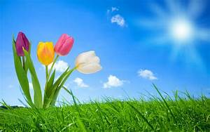 spring, nature, wallpapers