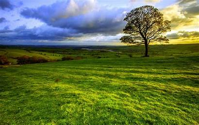 Bright Sunny Nature Tree Landscape Wallpapers Field