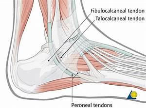 Calcaneus - AO Surgery Reference