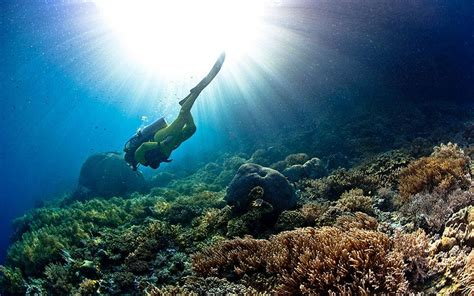 pearl diving  bahrain