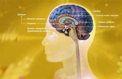 How Habits Are Formed In The Brain by How Habits Change The Brain Steemit