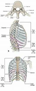 Best 25+ Thoracic vertebrae ideas on Pinterest | Surgery ...