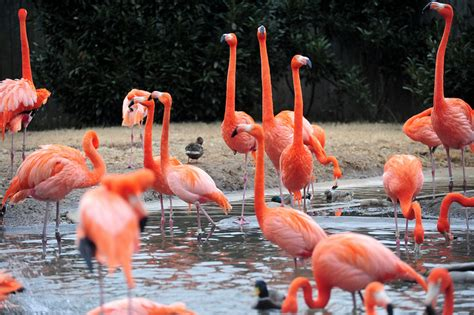 dc washington zoo vs