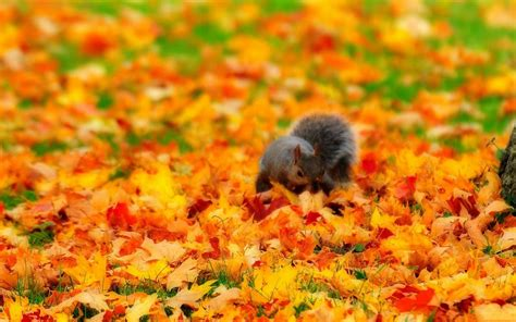 Free Fall Animal Wallpaper - autumn animal wallpaper wallpapersafari