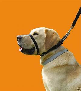 Canny collar non pull dog head halter training harness for Dog head halter