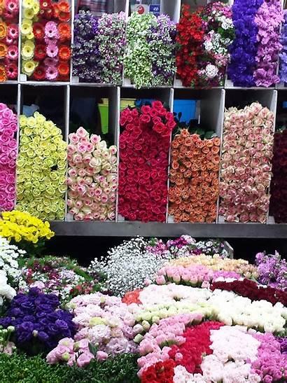 Flower Principles Certification Floral Benz Elements Market