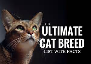 what cat breed are you the ultimate cat breed list with facts cbwp
