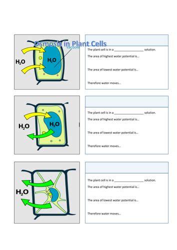 osmosis  cells turgid flaccid  plasmolysed
