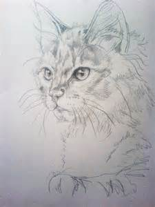 cat sketches cat sketch 1 by nimroderriver on deviantart