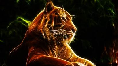 Tiger Animated 3d Animation Tigers Lights
