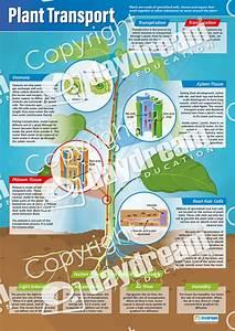 Plant Transport  U2013 Science Poster