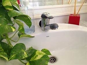 Geruch Aus Dem Abfluss : tipps gegen unangenehme ger che aus dem abfluss abfluss ~ A.2002-acura-tl-radio.info Haus und Dekorationen