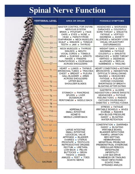 leskupu clinic journal spinal nerve functions
