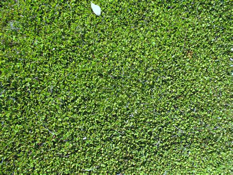 sun ground cover ground cover plants full sun www imgkid com the image kid has it