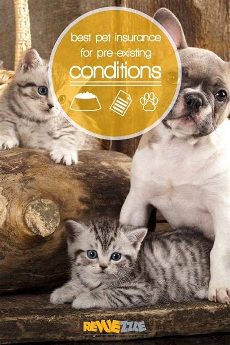 See the top 10 ranked pet insurance in 2021 & make an informed purchase. Best Pet Insurance for Pre-Existing Conditions   Revuezzle