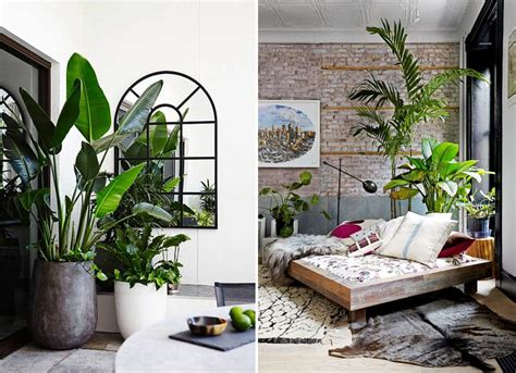Images Of Living Room Plants by Twelve Stylish Indoor Plant Ideas For City Living