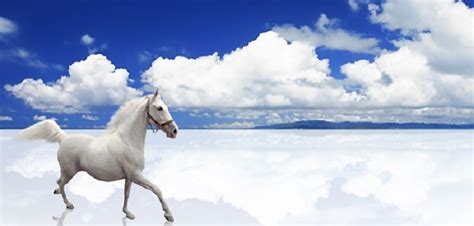 jeux de cuisine ecole complainte du petit cheval blanc