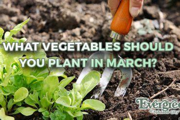 planting bulbs for evergreen of johnson city tn