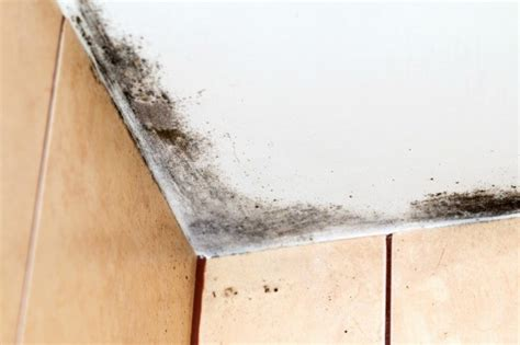 remove black mold   ceiling thriftyfun