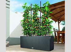 Best Plants For Balcony Pots — BALCONY IDEAS Terrace and