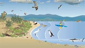 Saltmarsh And Tidal Flats