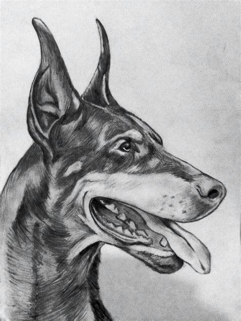 doberman pencil drawing  images dog drawing dog