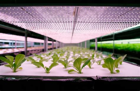 Artificial Light For Plants by Artificial Light For Plants Article Navigation
