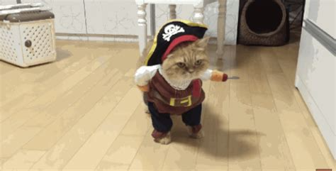 pirate gifs find share  giphy