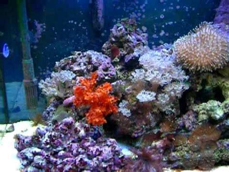 juwel lido marine aquarium 15 weeks