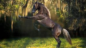 Cool Horse Wallpaper Wallpaper | WallpaperLepi
