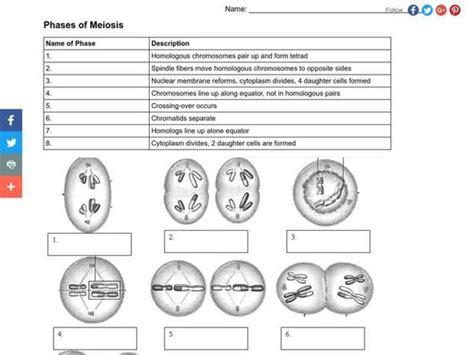 Meiosis Review Worksheet Homeschooldressagecom