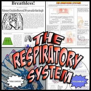 Respiratory System  Activities And The O U0026 39 Jays On Pinterest