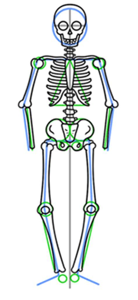 draw  skeleton