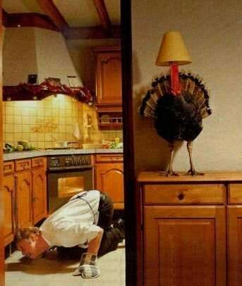 thanksgiving turkey lamp funny pictures entertainment
