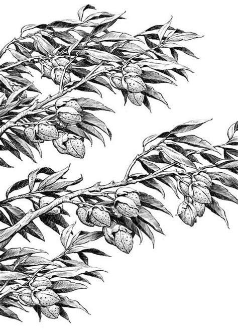 plant sketches images  pinterest botanical
