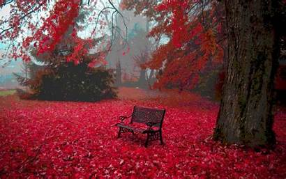 Autumn Leaves Wallpapers Widescreen Definition