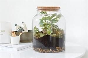 Acheter Terrarium Plante : terrarium plante bocal achat ~ Teatrodelosmanantiales.com Idées de Décoration