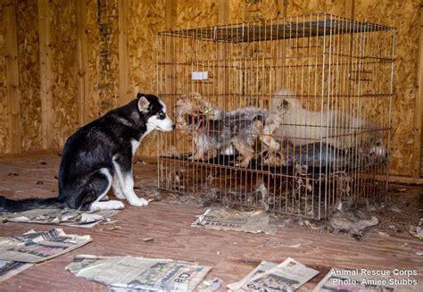 gibson  deputies investigate  puppy mill