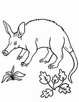 Coloring Aardvark Pages Coloringcafe Printable Colouring Pdf Sheet Stamp Birds Printing Animal Animals Designlooter sketch template