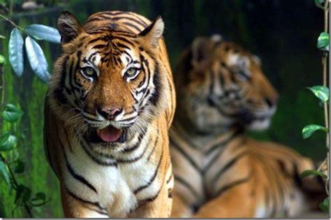 remarkable malaysian wildlife    road
