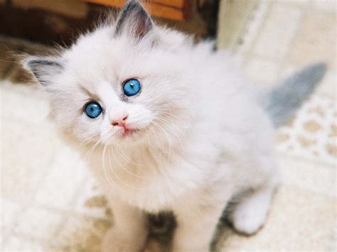 Top 10 Cutest Pet Cats In The World 2014 Youtube