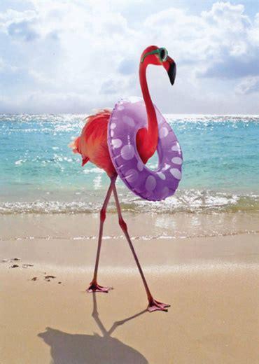 flamingo  swim ring funny feminine birthday card
