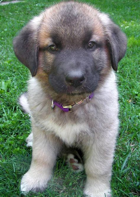 Best Puppy Mix Ideas And Images On Bing Find What Youll Love