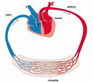 Exploring Sport Online  Athletes And Efficient Hearts  5 2