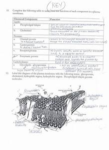 Download Acumen Cell Membrane And Transport Worksheet Aaa