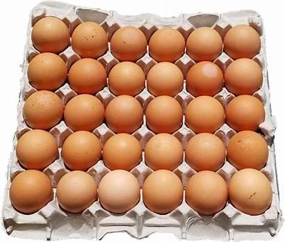 Eggs Brown Jumbo Dozen Farm Tray Fresh