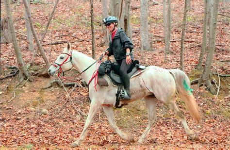 bridle halter under horse rope tack