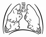 Lungs Human Respiratory Drawing System Clipart Coloring Lung Svg Vector Colouring Pages Transparent Template Body Vectors Clipartmag Sketch Brain Webstockreview sketch template